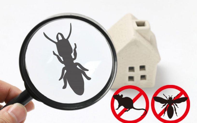 10月 ご家庭の害虫駆除相談会