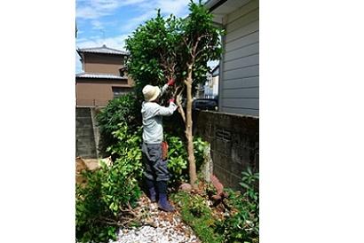 <お庭施工事例 vol.2>椿の伐採・目隠し
