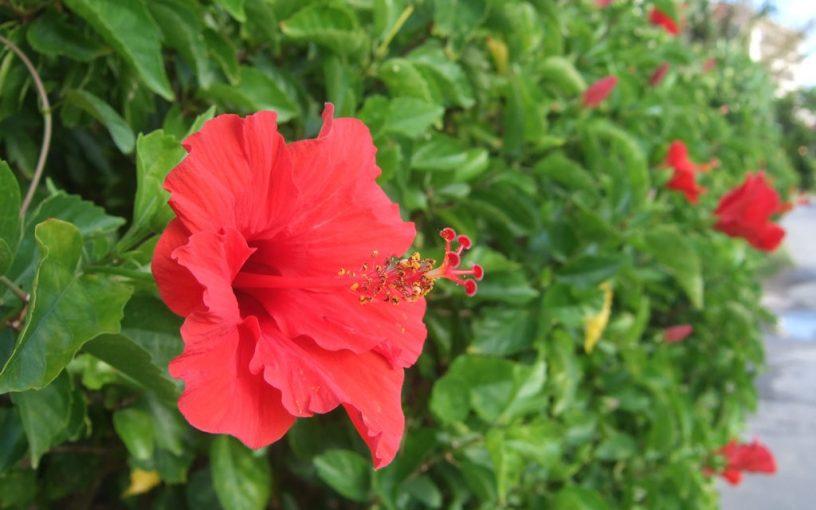 7月 グリーンアドバイザーの園芸作業実演
