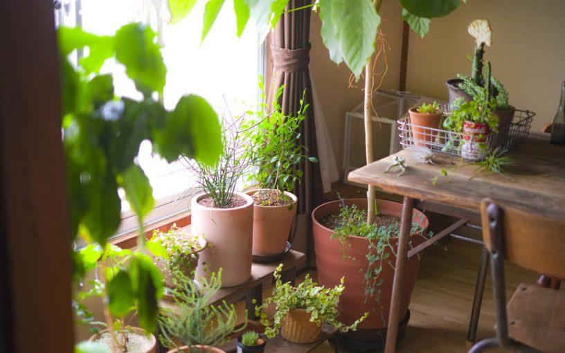 8月 グリーンアドバイザーの園芸作業実演