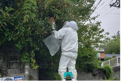 <その他施工事例 vol.29>スズメバチ巣の撤去と駆除