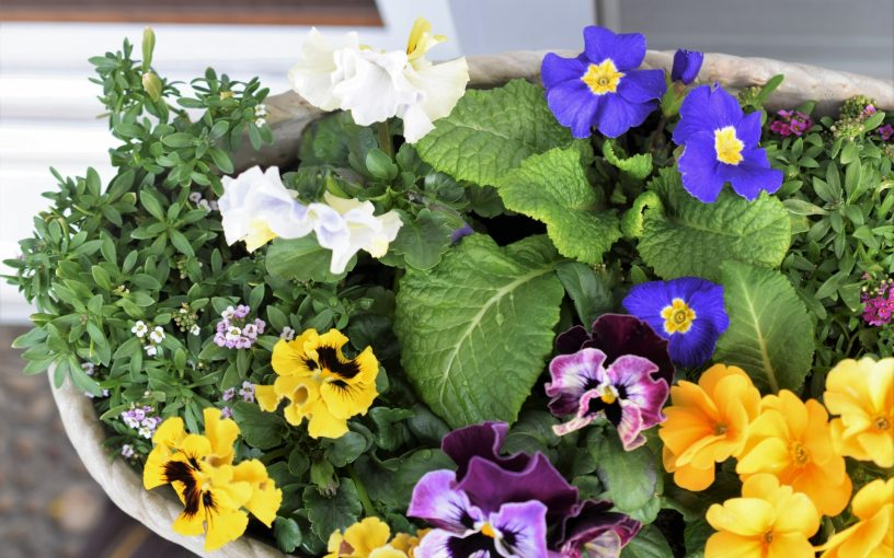 4月 グリーンアドバイザーの園芸作業実演